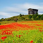 Penshaw Poppies by Doug Dawson