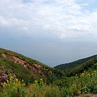 Cape Breton Highlands by merchant0