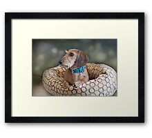 His Name is Winston... Framed Print