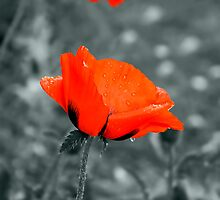 Poppy by Vac1