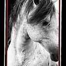 Stallion by ConnemaraPony