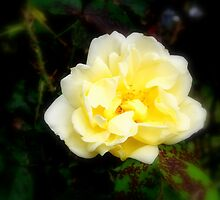 A touch of yellow  by shelleybabe2