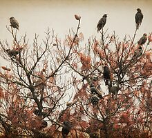 Cuckoo Bird Tree by yolanda