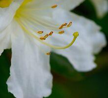 Flower Insides.  by Emily  Redfern
