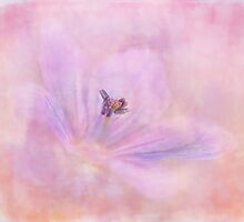 softness by Teresa Pople