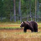 Brown Bear by Per E. Gunnarsen