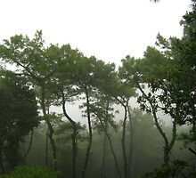 Mist covered wood by Tanuj Dutta
