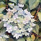 White Hydrangea by Ann Mortimer