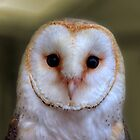 The Barn Owl by Rob Hawkins
