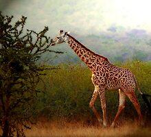 Tallness by Roger Sampson