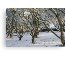 An Orchard of Snow, Ireland Canvas Print