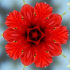 Red flower by Vac1
