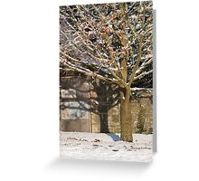 A Snowy Tree Bathed in Sunlight   Greeting Card