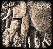 The Elephant and the Piggy by Donnie Voelker