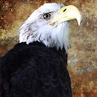 American Bald Eagle - SC State Aquarium, 2011 by Randall Faulkner
