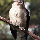 Kooka Portrait by WendyJC