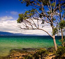 A tree at Verona Sands, Tasmania by Elana Bailey