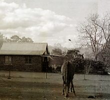 Horse Near Copmanhurst NSW by Carol James