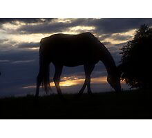 Conquest of Paradise  - Horses . by Brown Sugar .Tribute to - Vangelis . Photographic Print