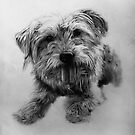 Chester - Dog Portrait by Reuben Vick