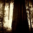sequoia by nessbloo