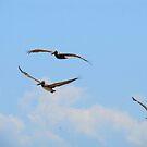 Freedom II - pelicans crossing the sky by Bernhard Matejka