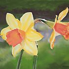 Daffodils by Karl Connolly