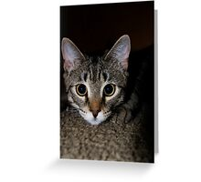 You Will Do My Bidding!! Greeting Card