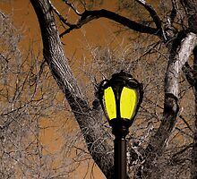 Lamp & Limbs by Brian Gaynor