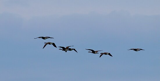 migration by Barry W  King
