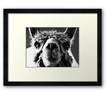 Say Cheese and Smile Pretty! Framed Print