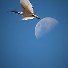 The Ibis & the Moon by Dean Gerrard