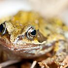 Rana temporaria - Common Garden Frog by Neil Clarke
