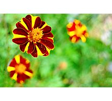 Tiger Striped Flower Photographic Print
