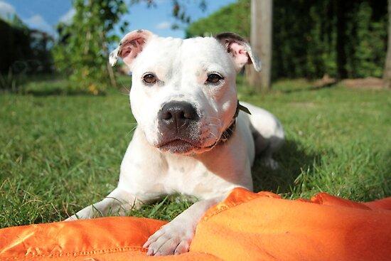 Millie on orange blanket by LisaRoberts