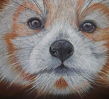 RED PANDA by jorgematins