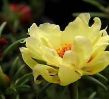 Sunny Moss Rose by Sharon Woerner