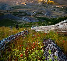 Mount St Helens Dawn by Inge Johnsson