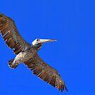 Fly Away by Mariann Kovats