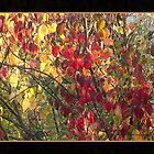 Colors of Autumn by RosiLorz