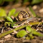 A Snails Perspective by reflector