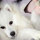 Yoshi gets a cuddle by anneisabella
