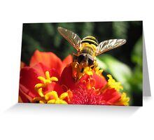 Hoverfly on a Zinnia Greeting Card