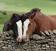 Two Shire Horses - Moffat by SarahDoubleYou