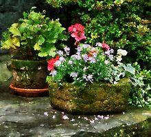 Geraniums and Lavender Flowers on Stone Steps by Susan Savad