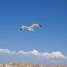 Seagull in the Sky by Renee D. Miranda