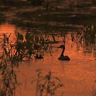 swampy ducks by Aavirett
