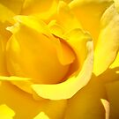 Glowing Yellow Rose Flower art prints Petal Blooming by BasleeArtPrints