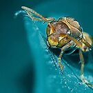 Inquisitive Wasp by Steve  Woodman
