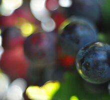 Bull Paddock Wines, Rutherglen - Sangiovese Grapes by Georgina James